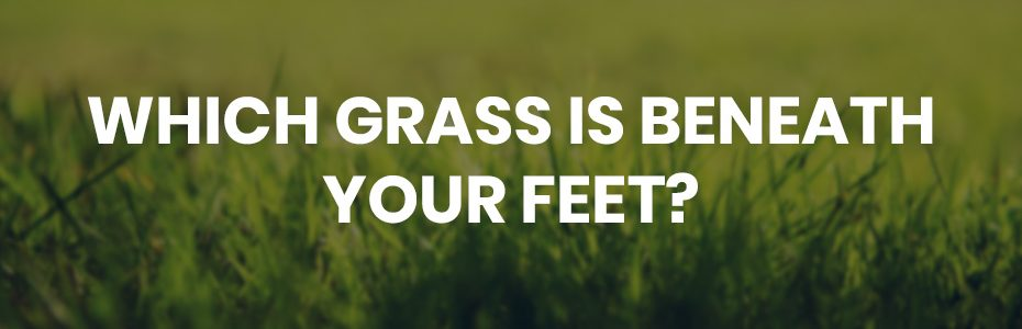 which grass is beneath your feet?